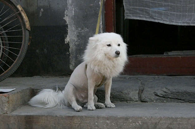 Tragically Half-Shaved Animals