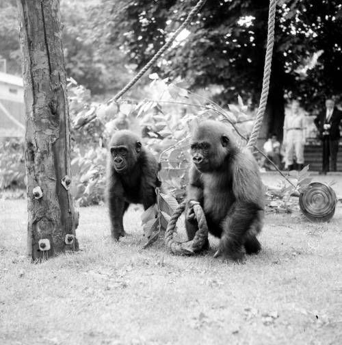 Old photos of zoo animals