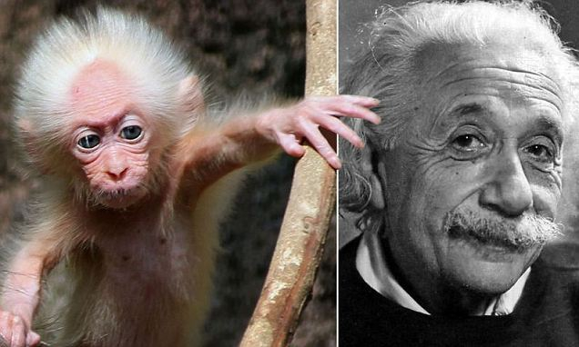 Attention! Einstein Twin Is Found