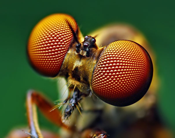 Macro photography: Eyes от mick за 30 oct 2012