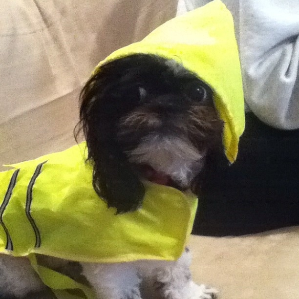 These Pups are Frankenstorm Ready!