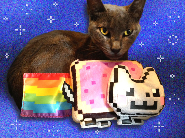 The Cat Who Inspired Nyan Cat is no Longer