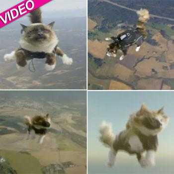 Flying Cats!