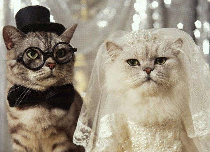 Get Married or Go to Cat Hell!