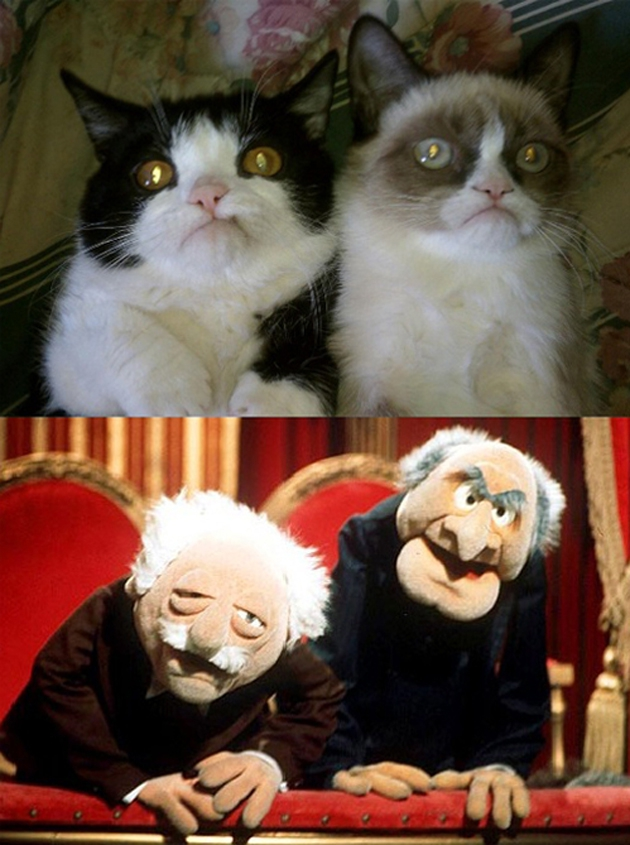 The Best 'Grumpy Cat' Look-Alikes