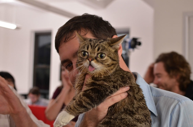 Lil Bub, the Office Cat от Marinara за 27 nov 2012