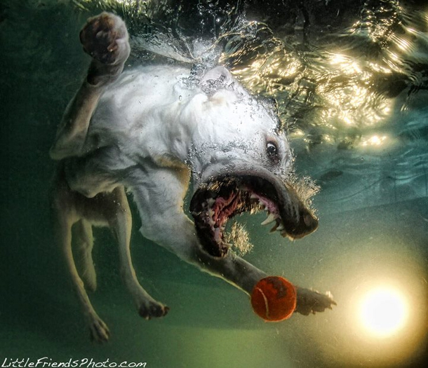 Hilarious Photographs Of Dogs Underwater By Seth Casteel