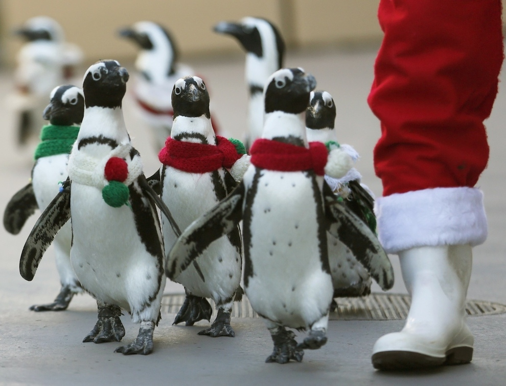 Forget the Elves, Japan has Penguins