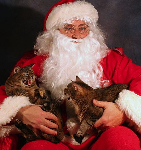 Cats Who Hate Christmas от Marinara за 30 nov 2012