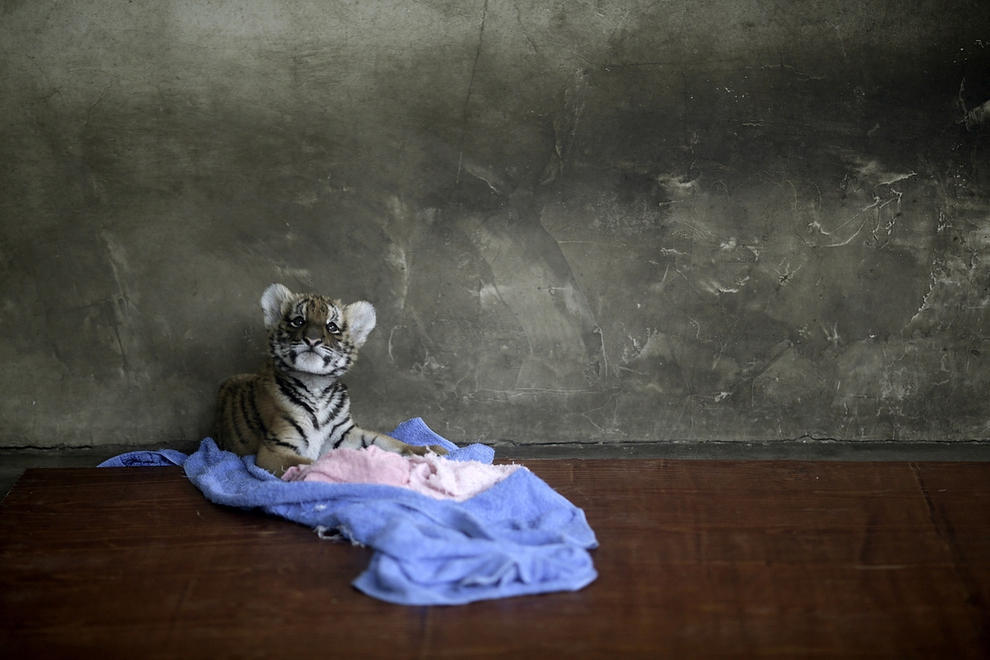 The Most Amazing Animal Photos of 2012