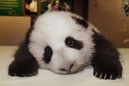 but you are all sad pandas because there's too much work