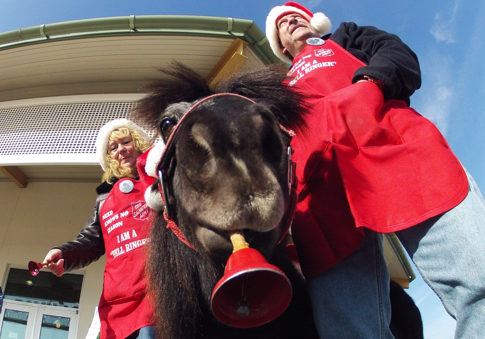 Meet Tinker, The Salvation Army Mini-Horse