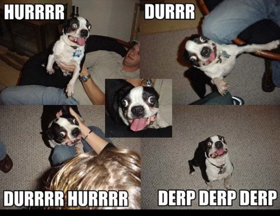 The most epic collection of Derpy Dogs