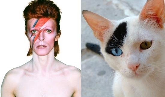 Rock Idol Reincarnation (As Cats!)