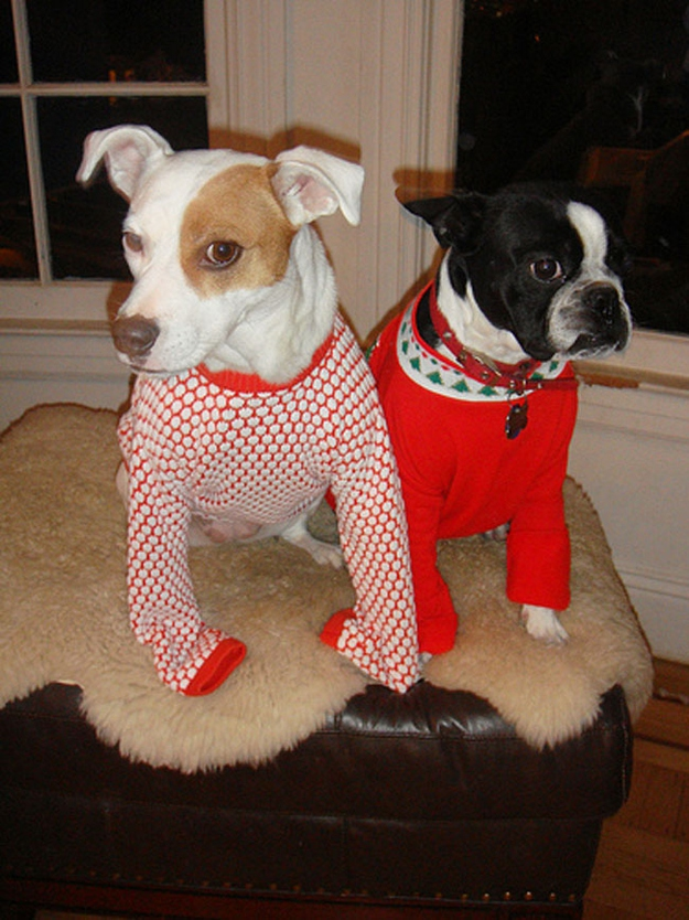 They Just Look Better in Ugly Sweaters