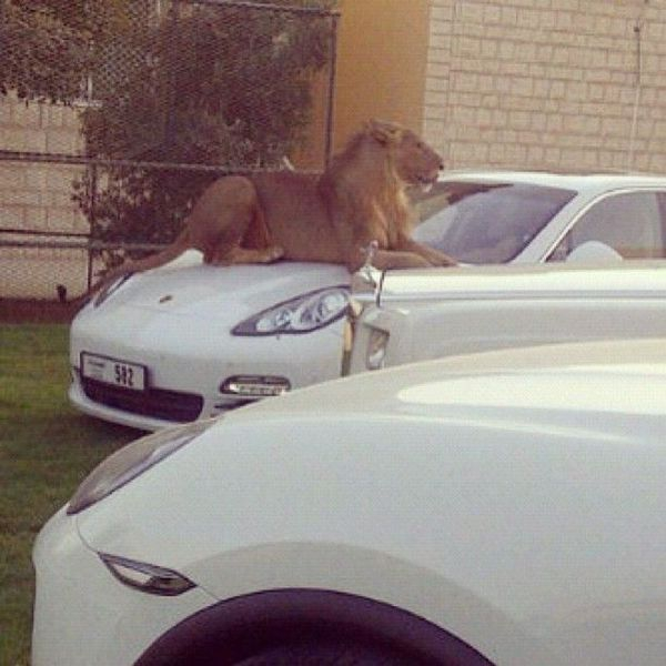 Best Security System of the Emirates