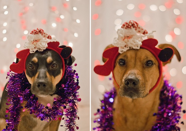 Christmas Dogs Are Here To Wish You A Merry Christmas