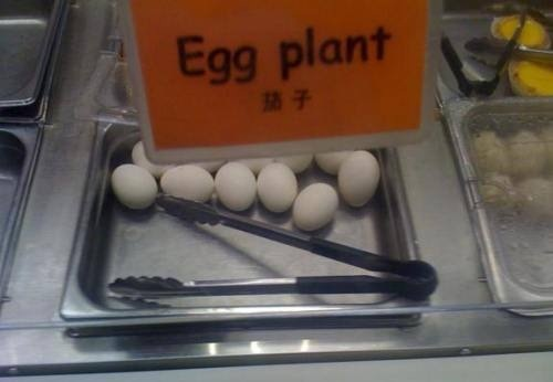 Eggplant. Eggs do not miraculously turn into plants. Doing it wrong.
