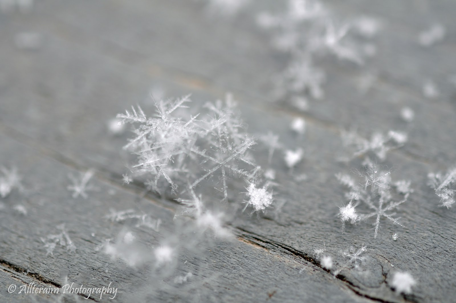 Speakin' of the Weather: The Anatomy of a Snowflake