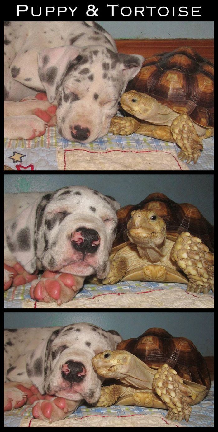 Cute Interspecies Friends