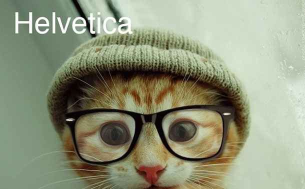 Hipster cats and Their fonts!