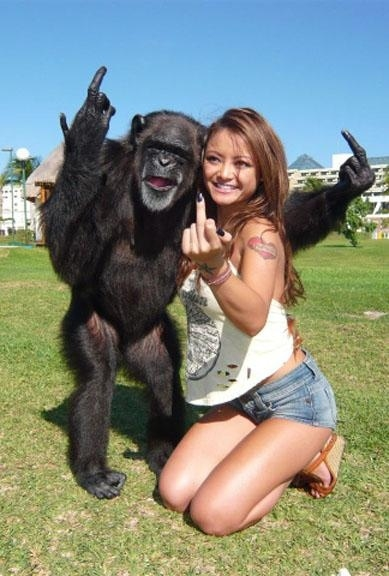 Reasons Why Monkeys Are Jerks