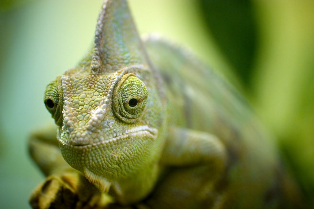 10 Things You Didn't Know About Chameleons