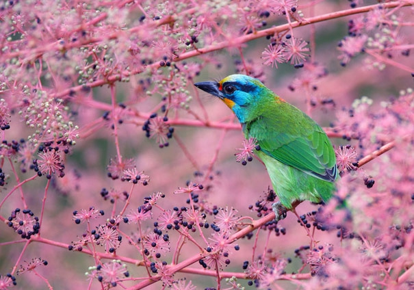 40 Breathtaking Bird Photos By John & Fish