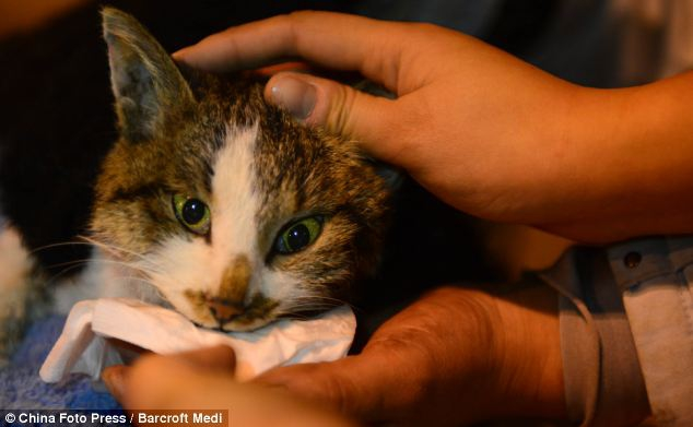 1000 Cats Saved From Being Eaten In China!!!