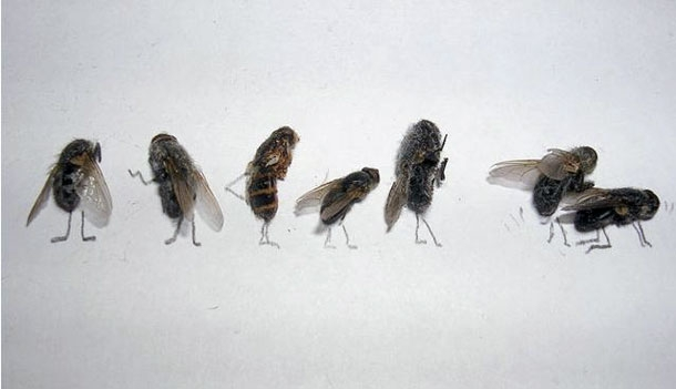 Dead Fly Art: Cool or Weird?