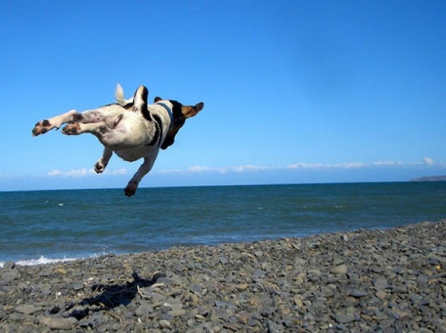 The 25 Funniest Hover Animals Ever