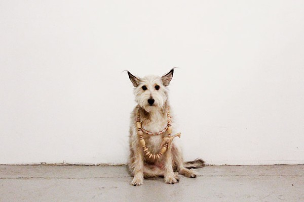 NYC's Next Top Model is a Dog!