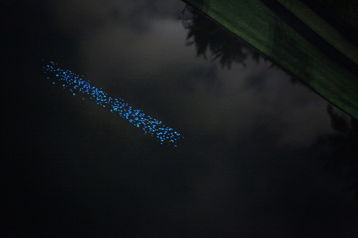 1,000 Beautiful Bioluminescent Leaves Radiate at Night