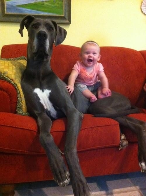 Dogs Who Don't Realize How Big They Are