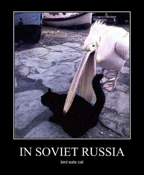 Demotivators Picdump  от Helen за 18 jan 2013