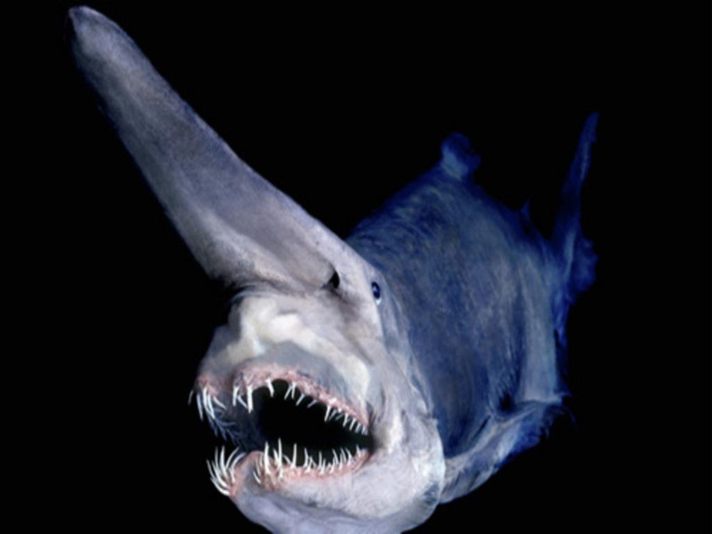 Deep Sea Monsters! You Won't Believe These Creatures Actually Exist.