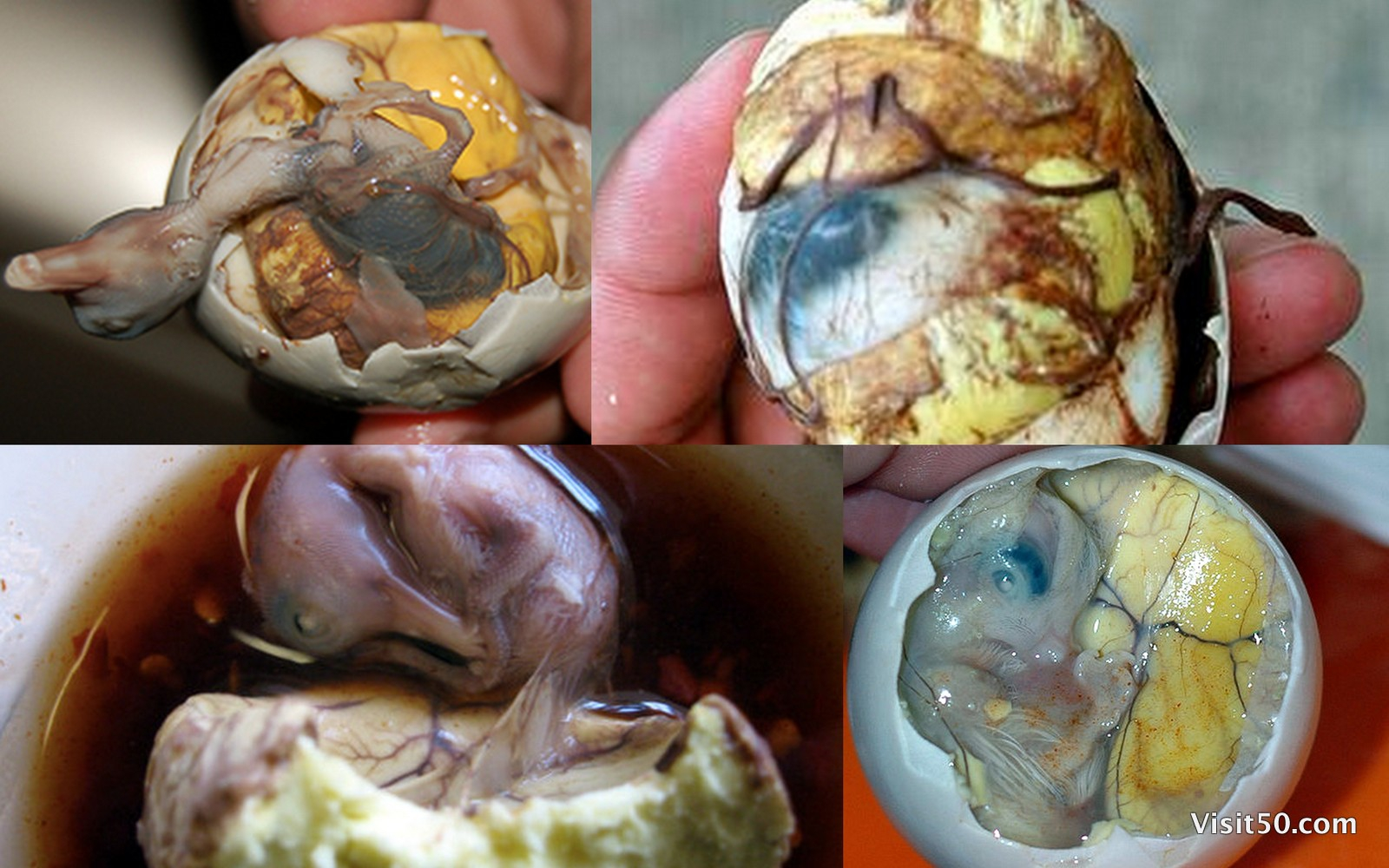 Ultimately Gross And Most Disturbing Foods From Around The World!!!