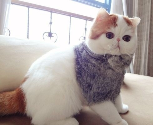 43 Fashionable Looks Worn By Snoopy The Cat