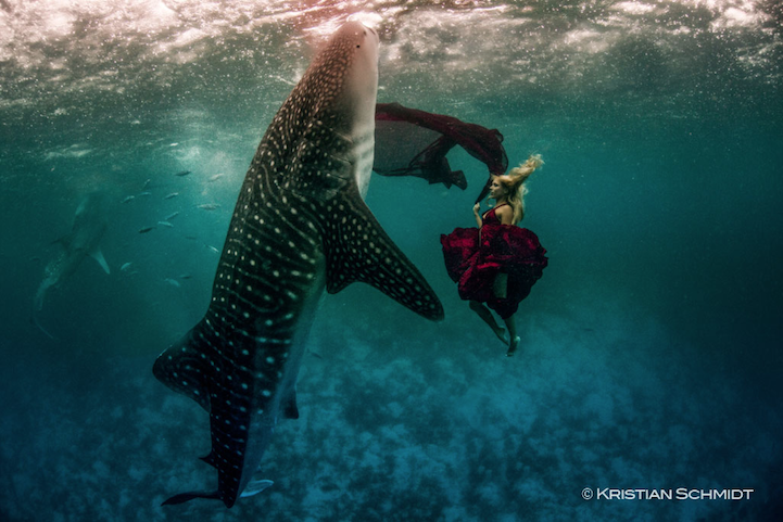 Spectacular Underwater Whale Shark Fashion Shoot