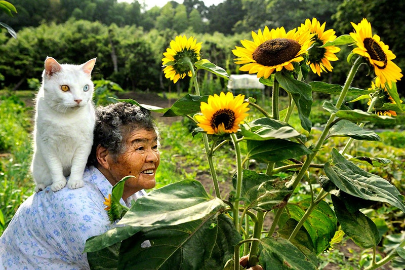 The Daily Life of a Grandmother and Her Cat
