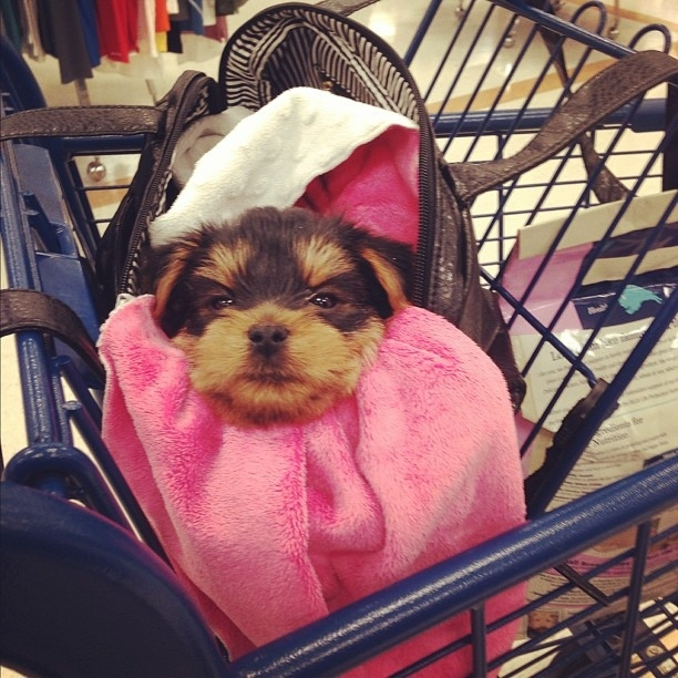 The 50 Best Dogs In Bags On Instagram
