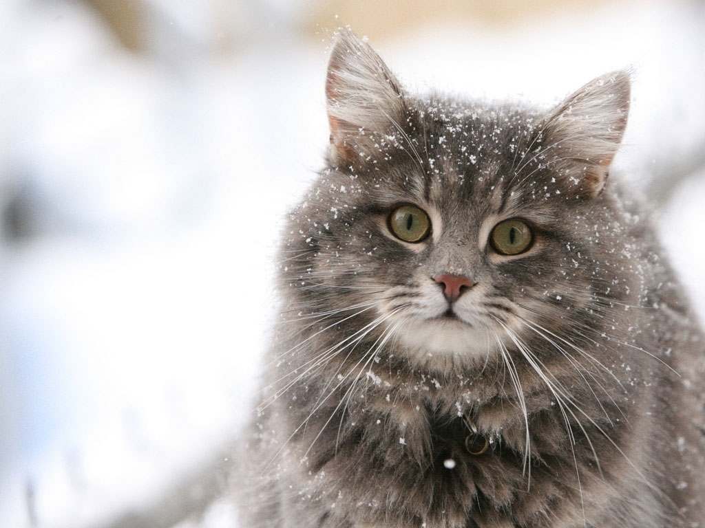 Hilarious Snow Kitties!