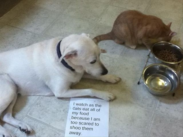 Poor Pooches Get Openly Shamed