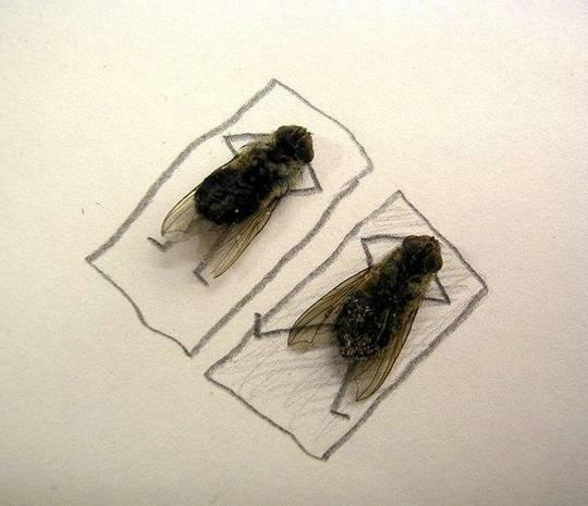 Weird World of Flies
