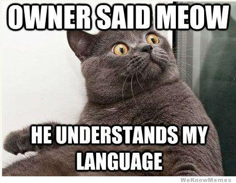 If Cats Could Speak