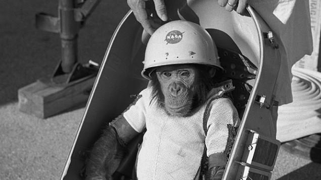 The Real Life Space Monkey