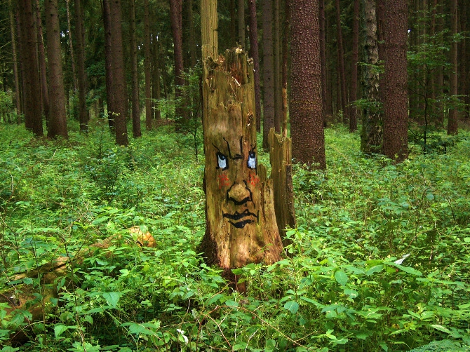 Expressive Faces Emerge From Rotting Tree Trunks