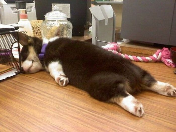Adorable Sleepy Puppies!