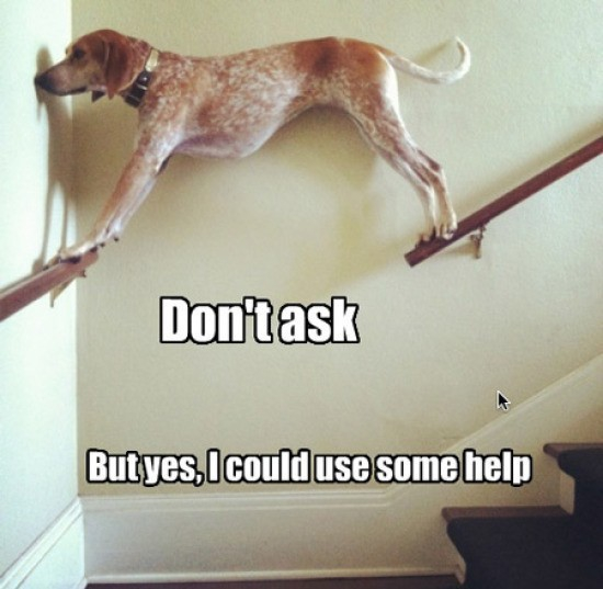 Animals stuck in bad situations = Funny for Humans.