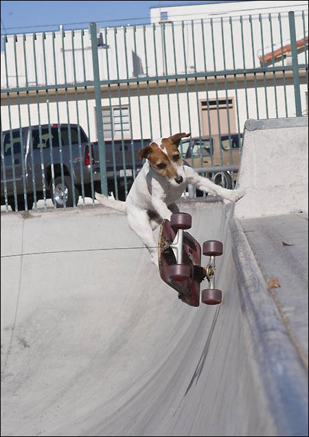 Some Talented Dogs Are Out There!